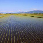 共和町水田の風景