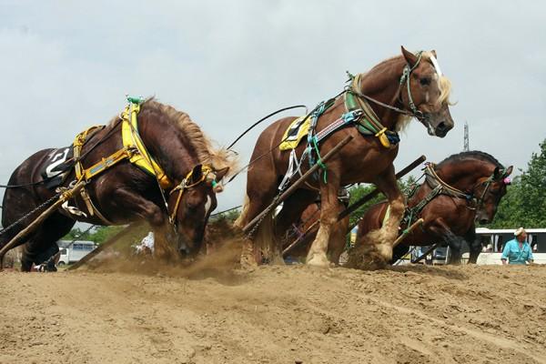 躍動感あふれる、共和町かかし祭り『ばん馬』