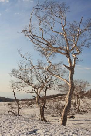 共和町冬の風景